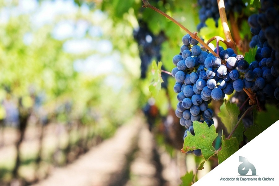 Día histórico para el Vino de Chiclana tras la aprobación de nuevas medidas que supondrán un avance muy significativo para el sector.